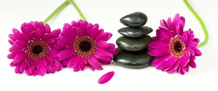spirituality therapy: Panoramic view of 4 balanced pebbles stones surrounded by 3 violet daisy gerberas