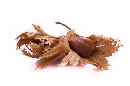 Hazelnut, fruit of the fallen hazel of the tree