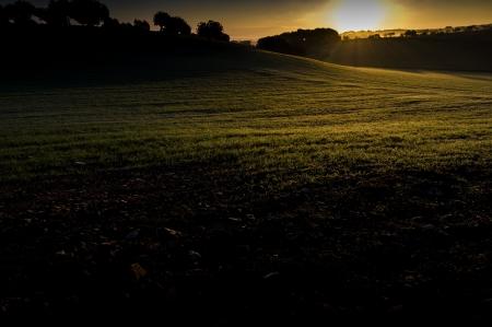 Rural scene in Majorca