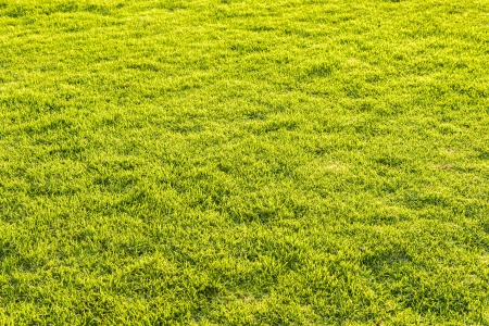 Detail of grass field Stock Photo - 13909188