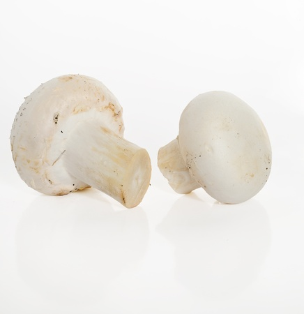 Mushrooms on a white background Stock Photo