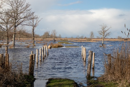 Flooded road in a beautiful natural landscape with marshes