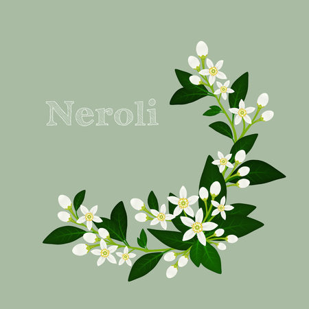 illustration with orange blossom: flowers, buds and leaves.