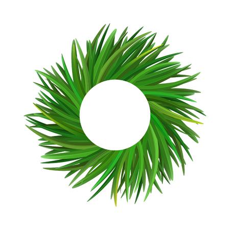Vetiver grass (khus or Chrysopogon zizanioides). Wreath of leaves. Vector illustration