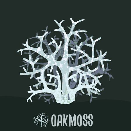 Oakmoss or tree moss (Evernia prunastri). Botanical illustration. Vector design element.