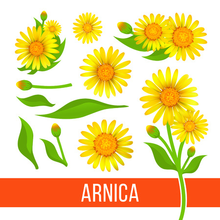 Arnica floral design elements. Set of flowers with leaves, buds and branches. Aromatherapy ingredient, herbal, medical item.