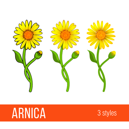 Arnica floral design element. Set of images with different styles - cartoon, semi realistic, with or without strokes. Flowers with leaves, buds and branches. Aromatherapy, herbal, medical ingredient.