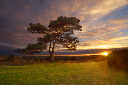 Bratley View Tree, probably the most famous tree in the New Forest. This image was taken on a warm october evening, during one of the most beautiful sunsets Iv ever seen. Stock Photo