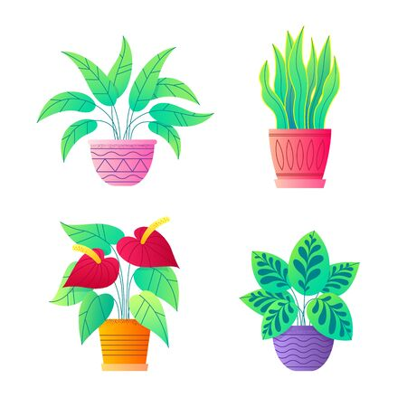 House plants vector collection. Peace lily, Anthurium, Snake plant. Icon set of potted indoor flowers. Botanical vector illustration.