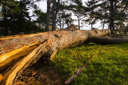 close-up of a broken tree