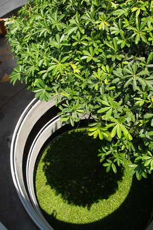 tree planted at the centre of spiral multi-storey car park