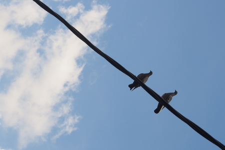 Two pigeons resting on a electric cable with blue sky background