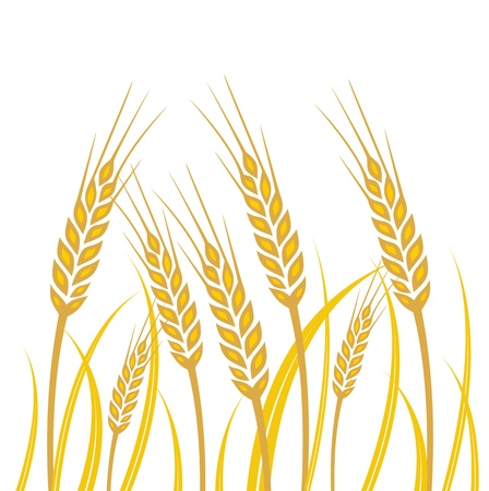 wheat illustration: Field of Wheat - illustration