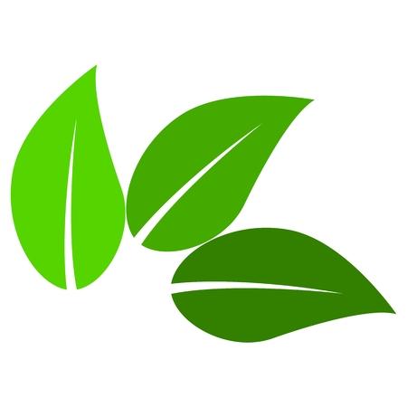 three leaf: Three Leaf Sign - illustration Illustration