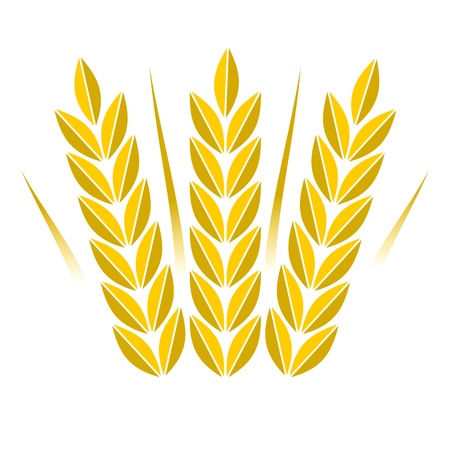 curled up: Agriculture icon golden wheat - Illustration
