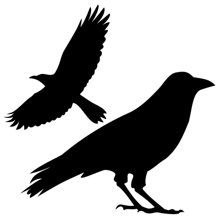 carrion: Silhouette of the crow - illustration