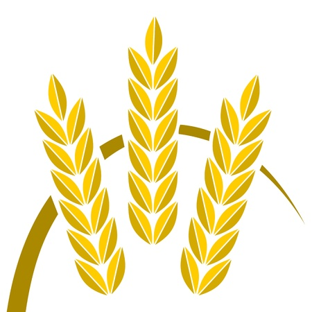 three objects: Agriculture icon golden wheat - Illustration
