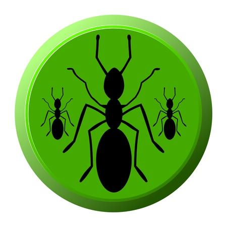 invasive: Ants icon - illustration Illustration