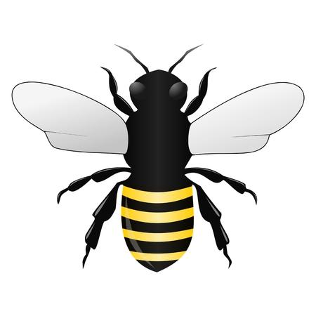 hunny: Bee