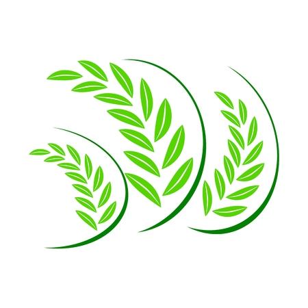 green wheat: Wheat Icon green Illustration