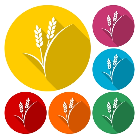 Set of simple colorful wheat ears Illustration