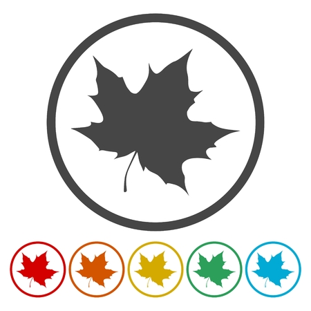 A collection of vector maple leaf icons Illustration