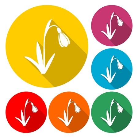 Snowdrop, vector icon - Illustration