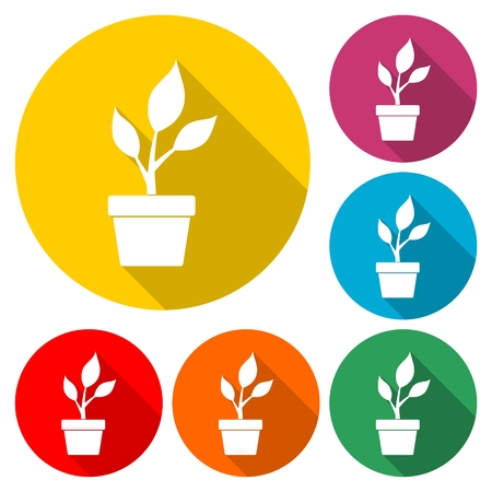 Young plant vector icon