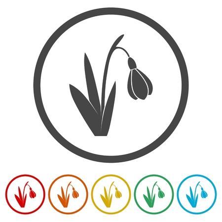 Snowdrop, set di icone vettoriali - illustrazione Vettoriali