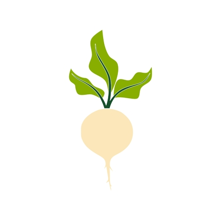 Sugar beet icon isolated on a white background.