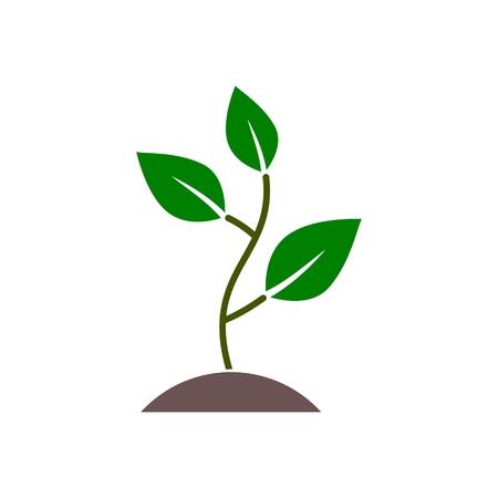 Plant sprout, Plant eco Vektoros illusztráció