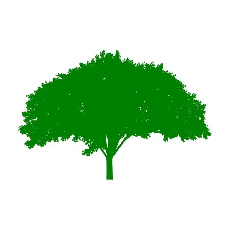 Tree silhouette icon