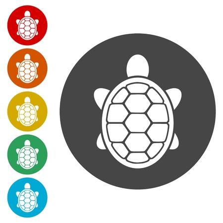 Turtle Icon Flat Graphic Design - Vector Illustration