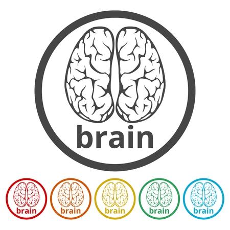 Human brain concept, Brain   design vector template, 6 Colors Included Illustration