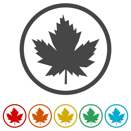 Vector Maple Leaf Icon, 6 Colors Included