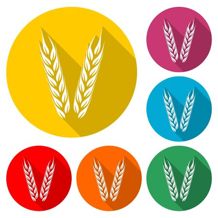 Wheat icon, Wheat ears, color icon with long shadow