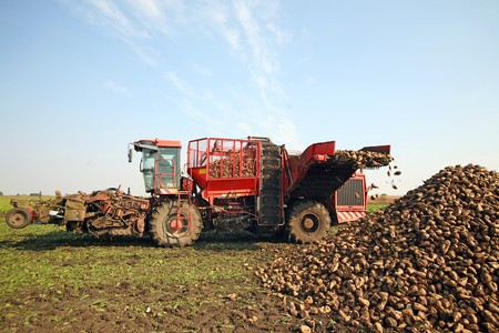 Harvester is harvesting sugar beet at the field Stock Photo - 8085457