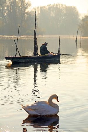 Swan and fisherman, river the Danube, central Europe Stock Photo - 8285326