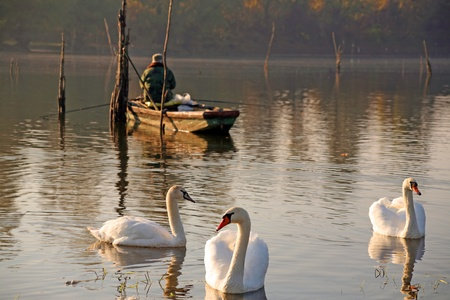 Swans and fisherman, river the Danube, central Europe Stock Photo