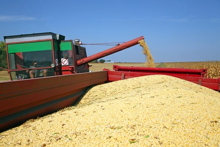 protein crops: Harvesting of soybean at the filed in Europe