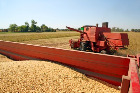 Harvesting and transportation of soybean photo