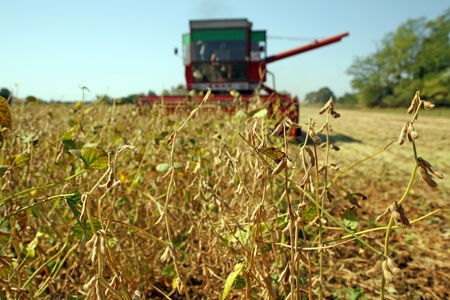 Harvesting of soybean at the filed in Europe photo