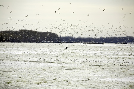 Frozen river Danube at South Europe with seagulls photo