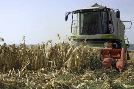 Corn harvesting, harvester at field photo