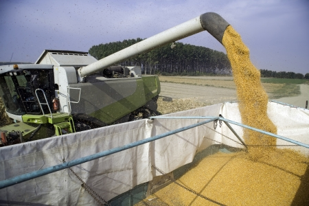 Corn seeds dumping from harvester to tractor Stock Photo