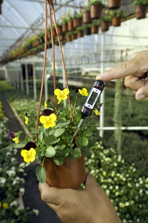 Greenhouse with plants. Gardener is measuring a  soil temperature Stock Photo