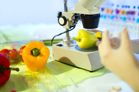 food testing: Food testing in the laboratory. GMO food. Laboratory