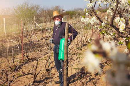 toxicity: Farmer sprays his vineyard. He is wearing protective equipment.