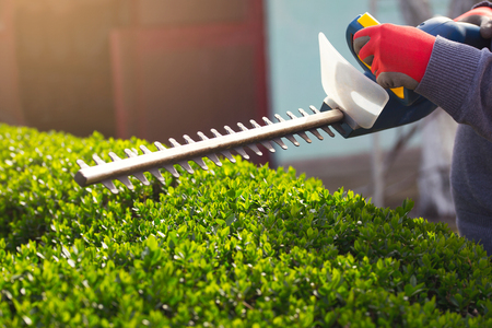 Cutting a hedge with electrical hedge trimmer. Selective focus 版權商用圖片 - 54043981