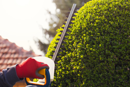 trimmer: Cutting a hedge with electrical hedge trimmer. Selective focus